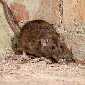 Pest Management in the Food Operations
